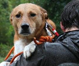 Bodhi ~ Humane Society Rescue
