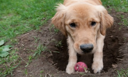 Has Your Dog Ever Buried His Bones, Or Even His Favorite Toys, In Your  Backyard? Well, If He Has, Hopefully He Doesnu0027t Make It A Habit To Dig Them  Up And ...