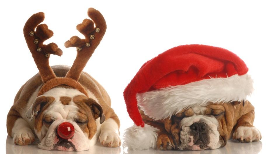 dogs-christmas.jpg