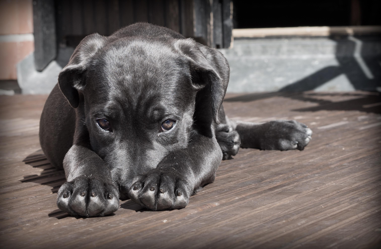 pet-dog-puppy-the-shy-52997.jpeg