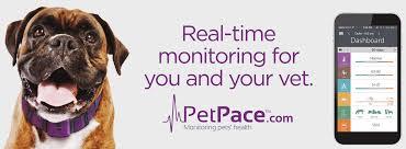 petpace_ad.jpg